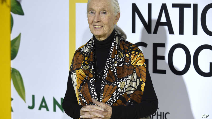 "Jane Goodall arrives at the Los Angeles premiere of ""Jane"" at the Hollywood Bowl, Oct. 9, 2017, in Los Angeles."
