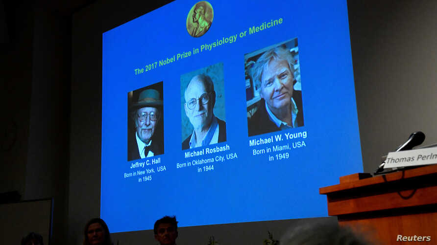 The names of Jeffrey C. Hall, Michael Rosbash and Michael W. Young are displayed during a news conference to announce the winner of the Nobel Prize in Physiology or Medicine 2017, in Stockholm, Sweden, Oct. 2, 2017.