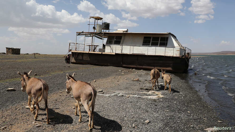FILE - Donkeys walk in front of a boat on a beach of Lake Turkana near Loiyangalani, Kenya, March 21, 2017.