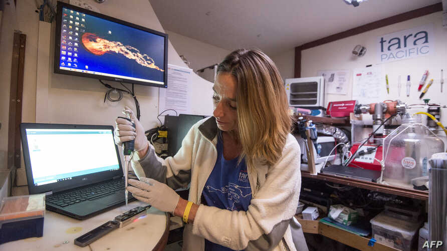 A scientist works on sequence of the genome aboard the scientific expedition yacht Tara in Groix Island, off Lorient, western France, Oct. 27 2018, as it returns in Lorient after a 2½-year expedition researching coral reefs in the Pacific Ocean.