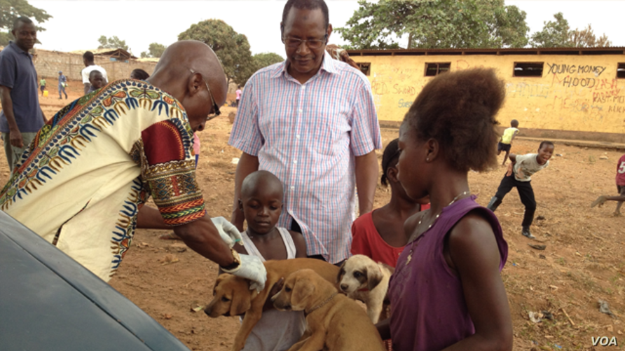 Children bring their dogs for a free vaccination, Freetown, Sierra  Leone, April 12, 2015 (Nina deVries/VOA)