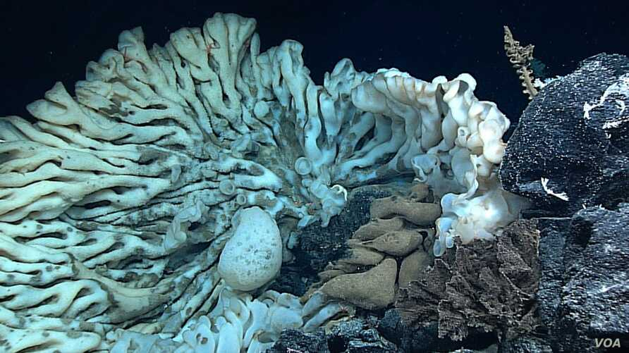 The largest sponge ever recorded was found off the coast of Hawaii.