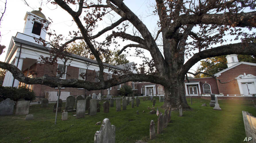 FILE - A sprawling white oak tree estimated to be 600 years old spreads over and through the nearly 300-year-old cemetery of the Basking Ridge Presbyterian Church in Basking Ridge, N.J., Oct. 17, 2016.