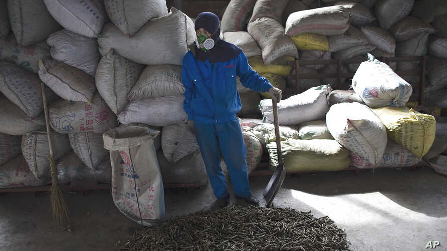 """A worker stands near the agricultural waste called """"green coal"""" fuel pellets on the floor inside a factory outside of Beijing, China. (File 2009)"""