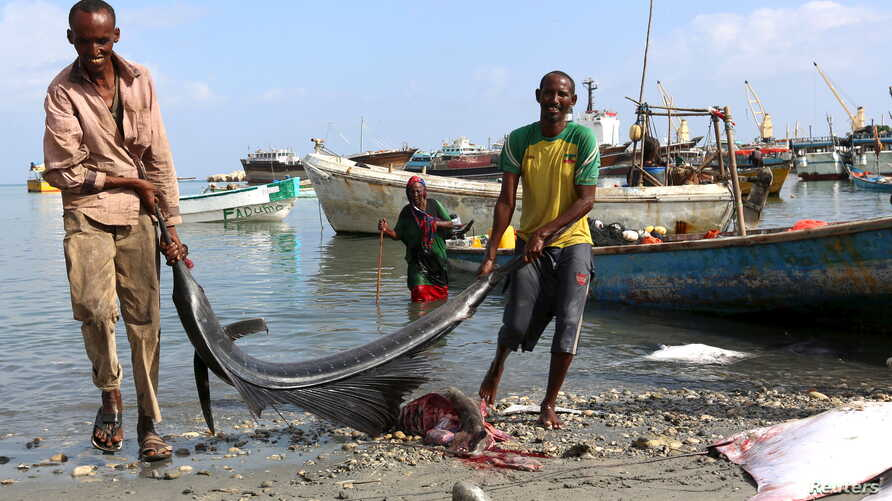 FILE - Fishermen carry fish from vessels in the Gulf of Aden to the shores of Bosasso, northern Somalia's breakaway Puntland region, April 15, 2015.