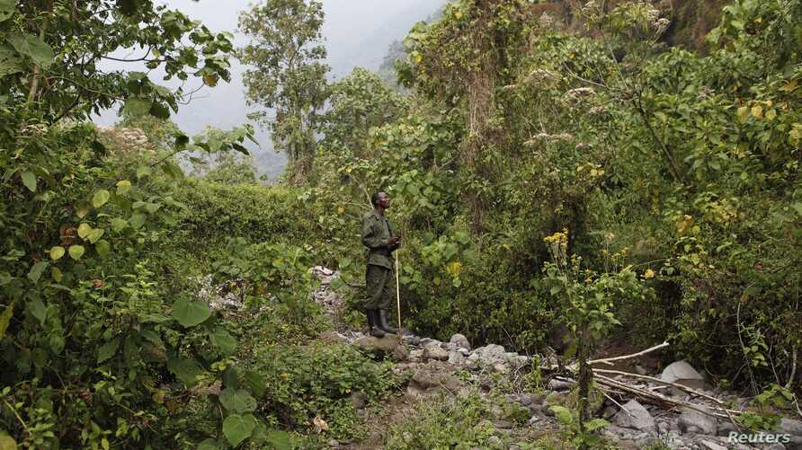 DRC / Virunga National Park