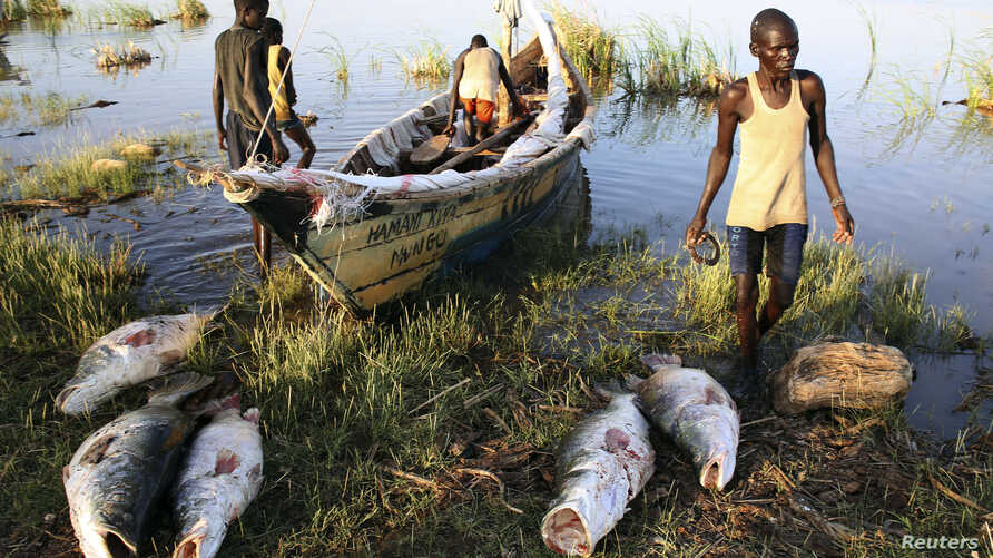 FILE - Turkana men unload freshly caught Nile perches from a boat at a fishing camp on the western shore of Lake Turkana, close to Todonyang, near the Kenya-Ethiopia border in northern Kenya, Sept. 24, 2014.