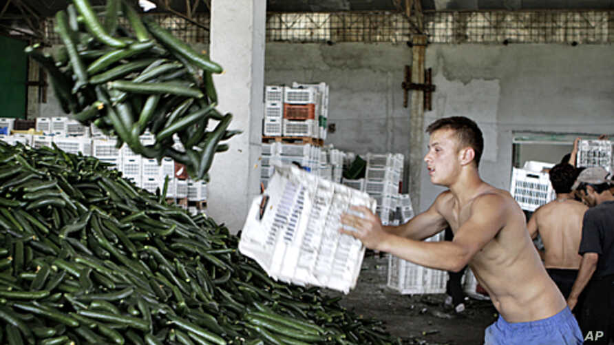 A man carries cucumbers collected for destruction at a greenhouse compound outside Bucharest, Romania, June 6, 2011.