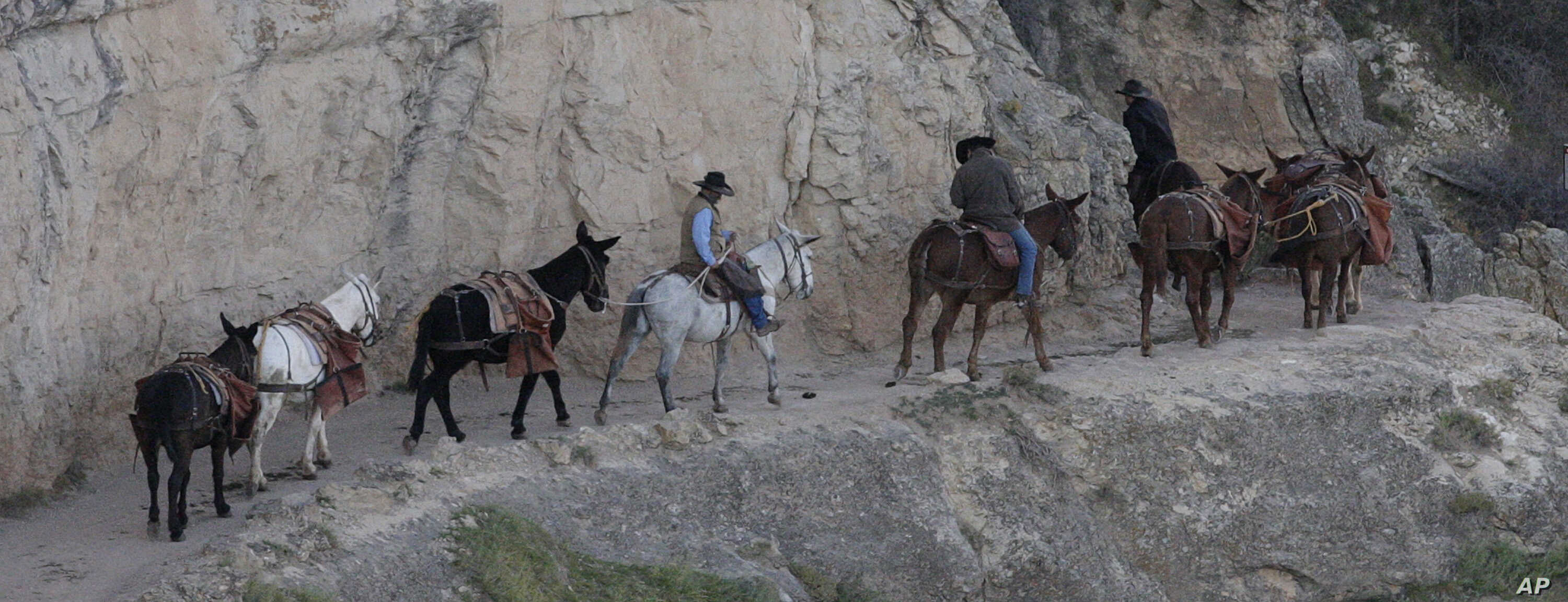 FILE - A mule team walks along the Bright Angel Trail on the South Rim of the Grand Canyon National Park in Ariz., Oct. 22, 2012.