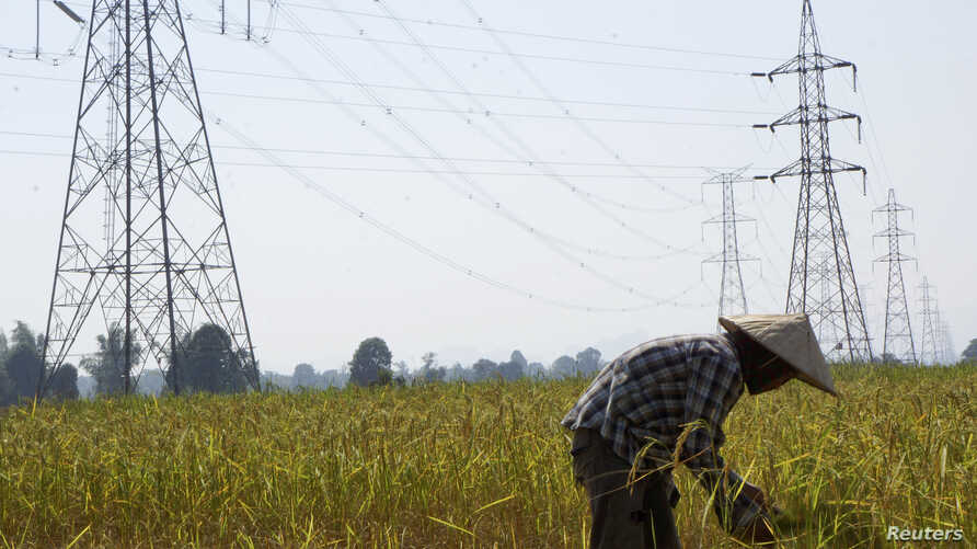 FILE - A farmer works in a paddy field under the power lines near Nam Theun 2 dam in Khammouane province, Laos.