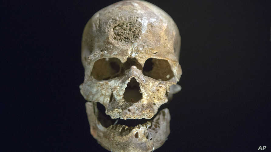 "FiLE - The 28,000-years-old skull of a Homo sapien called ""Cro Magnon,"" found in Dordogne, France, is displayed during a press visit at Musee de l'Homme, in Paris, France, Oct. 14, 2015."