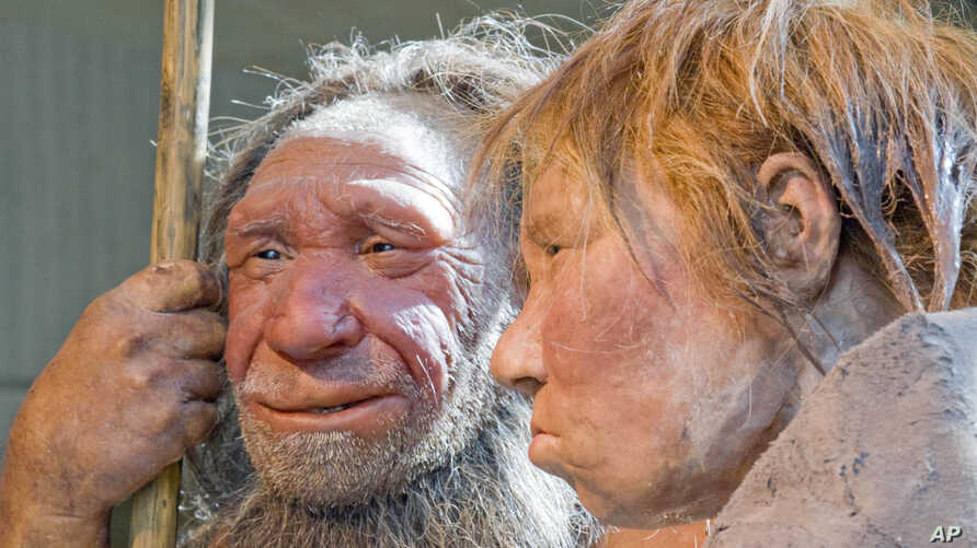 FILE - A March 20, 2009, photo shows reconstructions of a Neanderthal man, left, and woman, at the Neanderthal Museum in Mettmann, Germany.