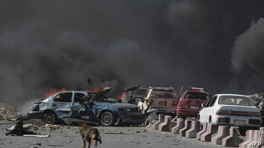 A dog is seen running at the site of a car bomb attack in Kabul on May 31, 2017.