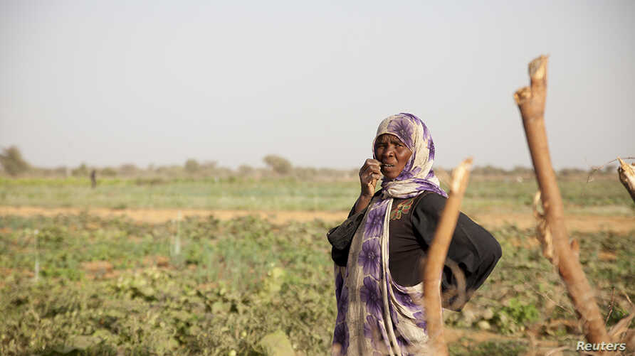 A woman stands in a field of vegetables in R'Kiz, Trarza region, Mauritania, April 1, 2018.