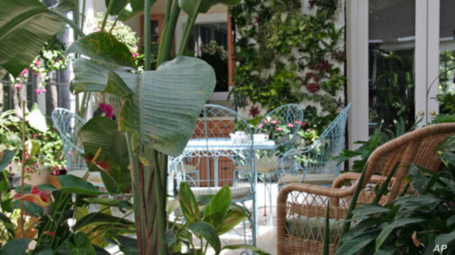 Ruth Kassinger's conservatory started as a refuge and has
