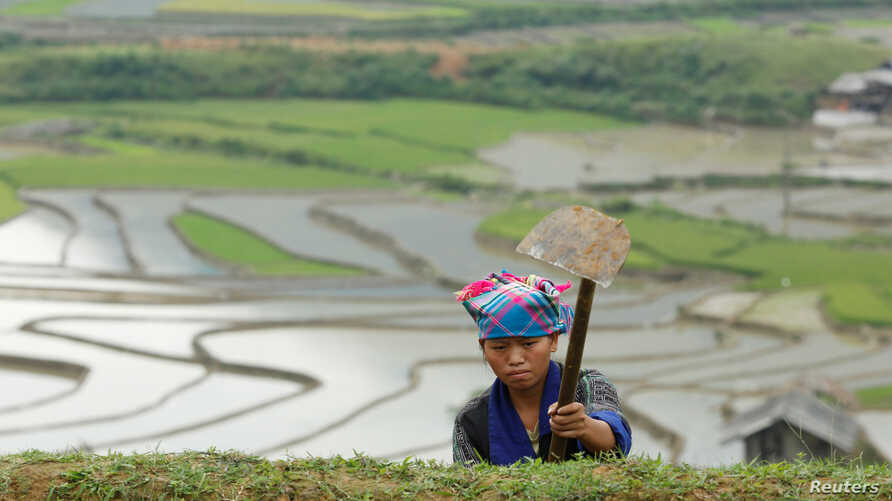 A farmer works on a terraced paddy field for the new rice season in Vietnam's northern Mu Cang Chai district, 360 km (225 miles) northwest of Hanoi, June 6, 2016.