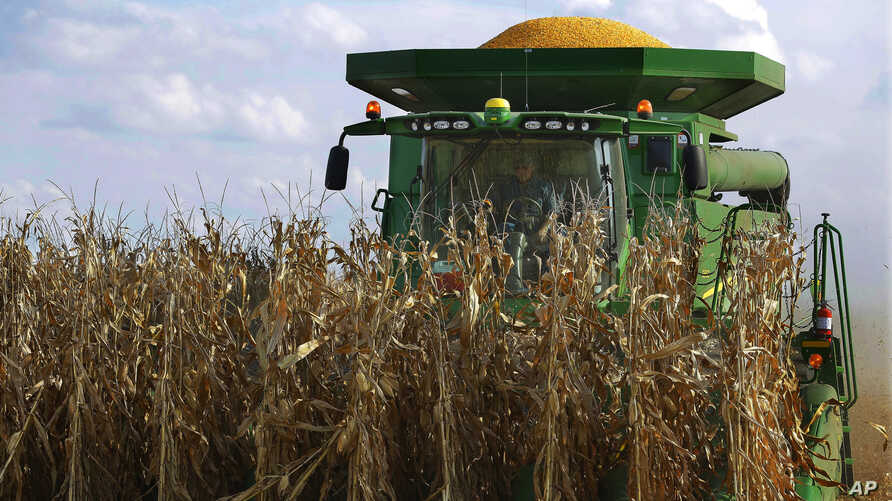 Central Illinois farmers harvest their corn crops, Sept. 14, 2016, in Loami, Illinois.