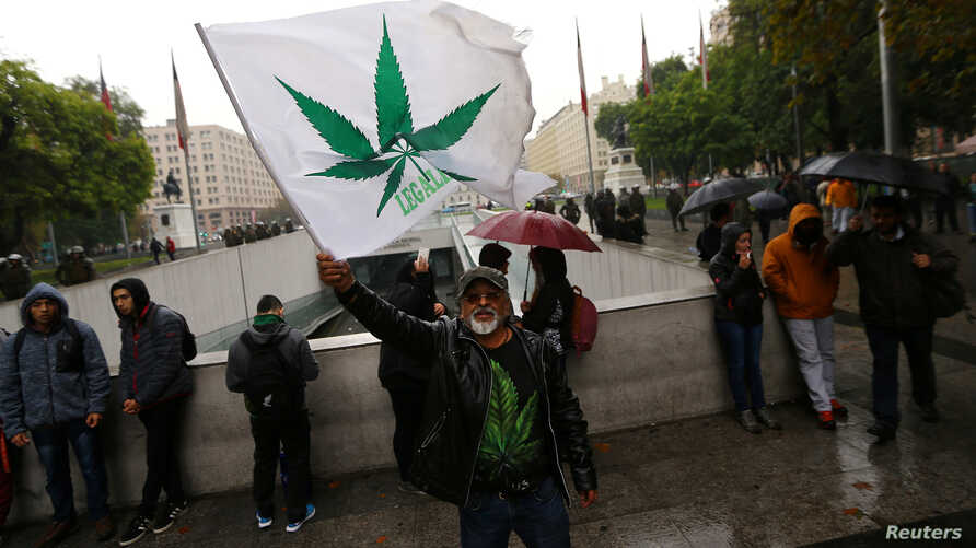 A man waves a flag during a rally against drug trafficking and in favor of the legalization of self-cultivation of marijuana for medicinal and recreational purposes in Santiago, Chile, April 20, 2017.