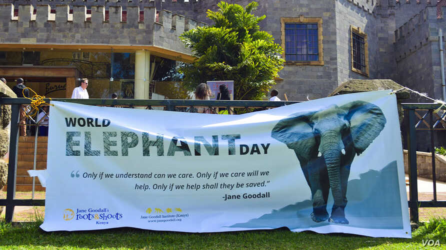The African Wildlife Foundation co-sponsored a pre-World Elephant Day event in Karen, Kenya August 9, 2014. Photo credit to Immanuel Muasya/Benuels Photography