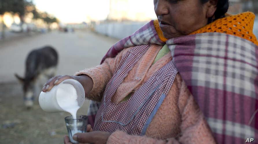 FILE - Donkey milk vendor Andrea Aruquipa, an Aymara indigenous woman, pours a glass of milk from her donkey for a client in El Alto, Bolivia, May 24, 2016.