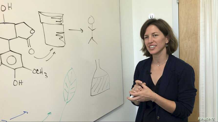 Stanford chemical engineering professor Elizabeth Sattely explains how she produced a common cancer drug in a laboratory plant, in this undated handout picture courtesy of Stanford University.