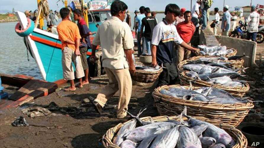 An Acehnese man unloads fish from fishing boats in Banda Aceh on the Indonesian island of Sumatra (file photo)