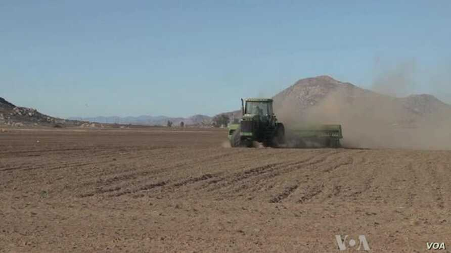 California Drought Could Impact World Food Prices