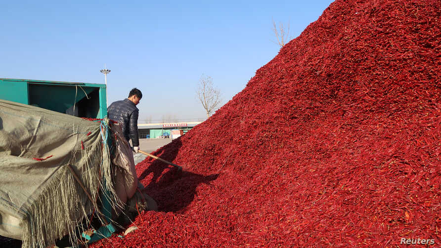 A worker works near a pile of chillies at a market in Jinxiang, Shandong province, China, Jan. 19, 2017.