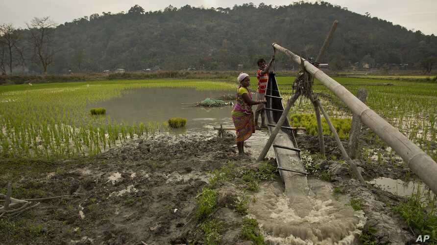 An Indian woman helps her farmer husband irrigate a paddy field using a traditional system, on the outskirts of Gauhati, India, Feb. 1, 2019.