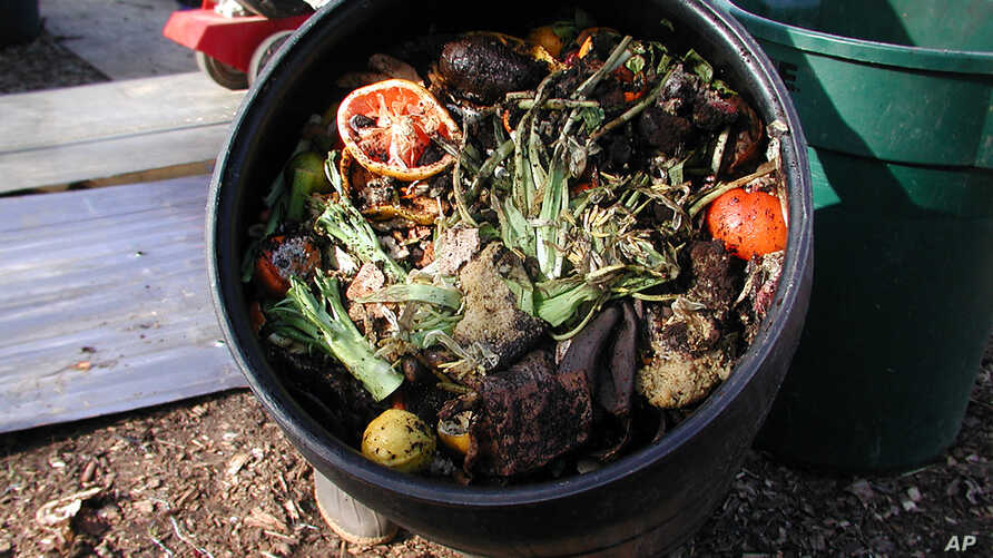 Organic food waste delivered each week is shredded and then fed to worms to compost.  (Rosanne Skirble/VOA)