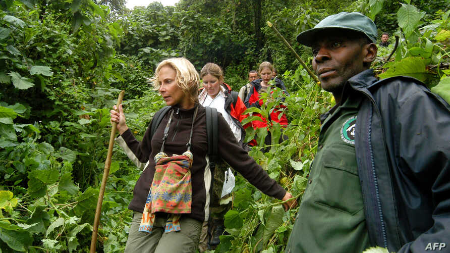 FILE - Dominique Bavukahe-Manir, chief inspector of the Jomba area at the National Park of Virunga in the DRC accompanies tourists to observe gorillas at the National Park of Virunga.
