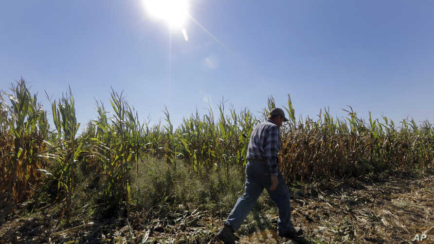File - Congress moved one step closer to ending a politically unpopular $5 billion subsidy that pays farmers regardless of need.