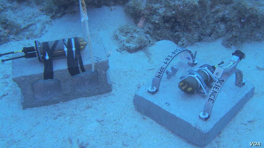 The acoustic recorders collect all sounds of the reef from fish and invertebrates, to wind, rain and boats. (Credit: T. Aran Mooney, Woods Hole Oceanographic Institution)