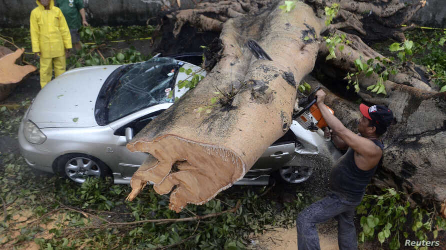 A worker uses an electric saw to remove a huge tree that fell on top of a car during the onslaught of Typhoon Rammasun, (locally named Glenda) that hit Makati city in Manila, July 16, 2014.