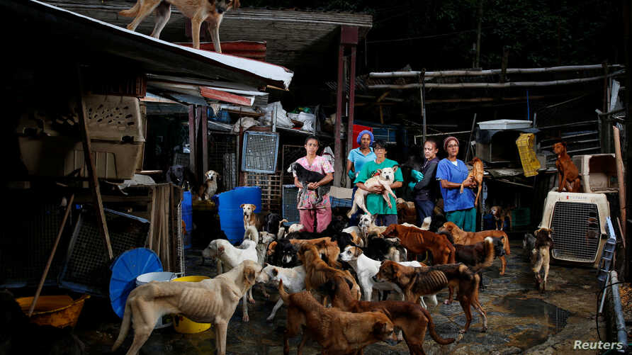 (L-R) Maria Silva, Milena Cortes, Maria Arteaga, Jackeline Bastidas and Gissy Abello pose for a picture at the Famproa dogs shelter where they work, in Los Teques, Venezuela, Aug. 25, 2016.