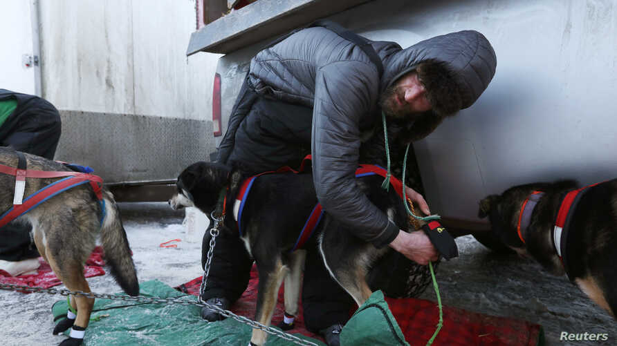 Nicolas Petit checks his dogs before the ceremonial start of the 47th Iditarod Trail Sled Dog Race in Anchorage, Alaska, March 2, 2019.