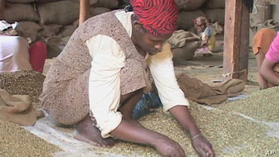 Workers inspect coffee beans in Ethiopia