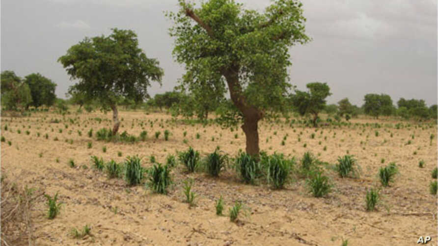 Crops grow better when planted near trees.