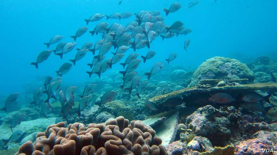 Biodiversity will decrease in the world's oceans as climate changes allows invasive species move into new geographic regions. (Credit: Nick Graham)