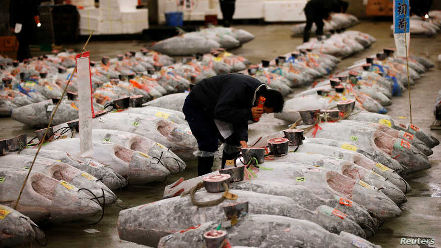 A wholesaler checks the quality of frozen tuna displayed at the Tsukiji fish market before the New Year's auction in Tokyo, Japan.