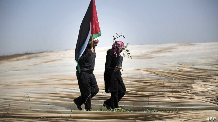 """Palestinians, a man holding a Palestinian flag and a woman carrying an olive tree, walk through rows of greenhouses on """"Land Day"""" during which people notably plant olive trees on March 29, 2014 near the Israeli border in Jabalia, in the northern Gaza"""