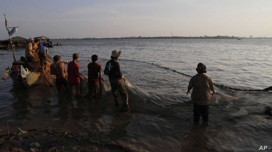 Ethnic Vietnamese fishermen collect catches from the Mekong river near Arey Ksat village at the outskirt of Phnom Penh, Cambodia, Thursday, Feb. 6, 2014.