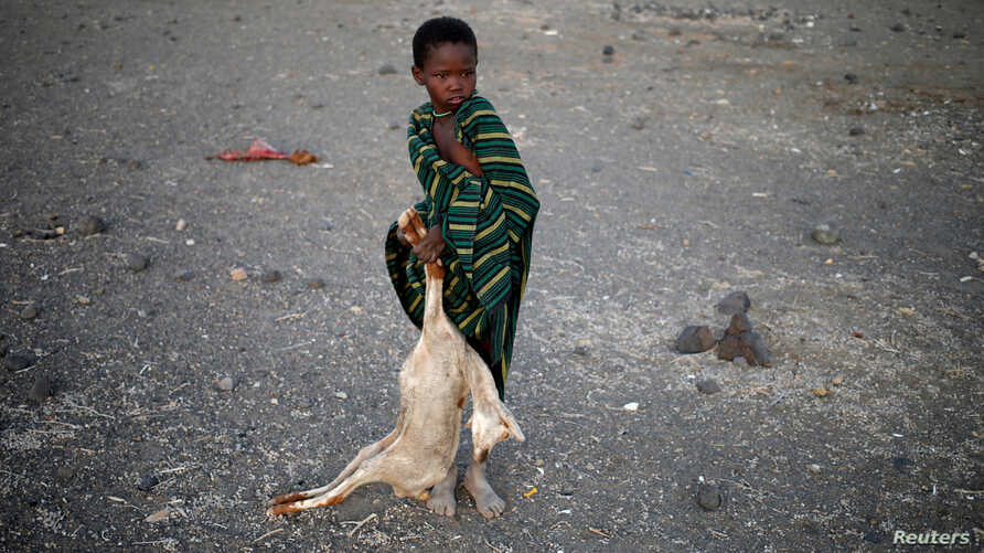 FILE - A boy carries a carcass of a goat in a village near Loiyangalani, Kenya, March 21, 2017.