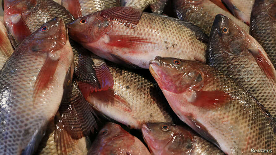 Fish are seen in a fish market  near the canal of Port Said, Egypt, March 18, 2018.