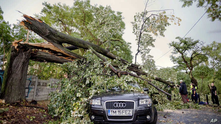 Emergency workers stand next to a fallen tree in Timisoara, Romania, Sept. 17, 2017, following a deadly storm.