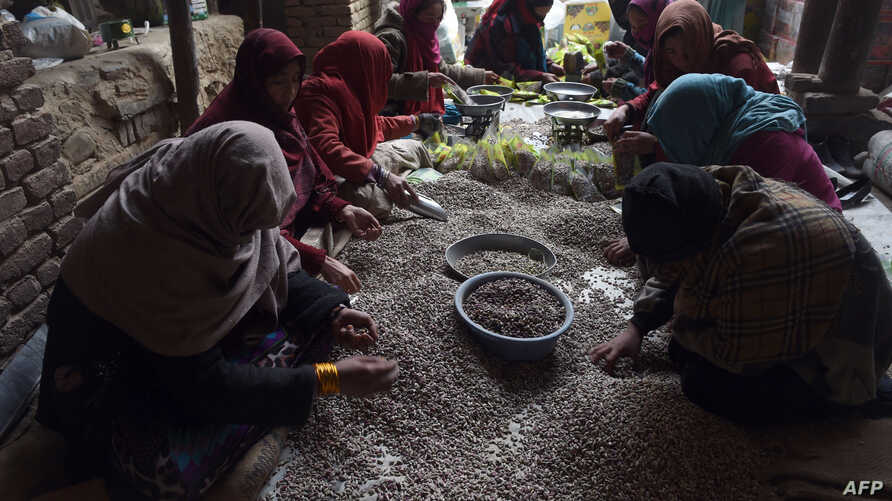 FILE - Afghan women prepare pistachio seeds at a local dried fruit factory in Kabul, Dec. 31, 2014.