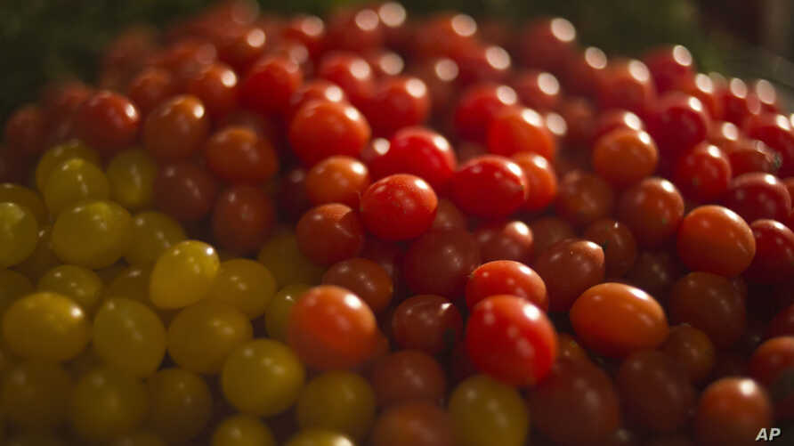 """In this Jan. 4, 2018 photo, small yellow and red """"drop tomatoes"""" are spawning new recipes at a restaurant in Tel Aviv, Israel."""