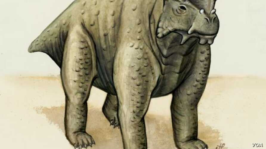 About the same size as a cow, this pre-reptile also stood the same way — upright with its legs underneath. It may be the earliest known creature to do so, according to a new study. (Brown University)