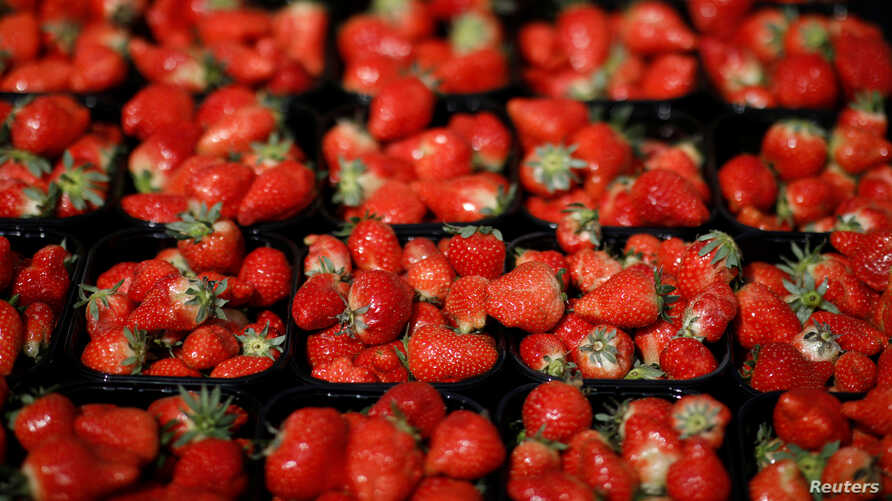 Boxes of fresh strawberries are displayed for sale in Copenhagen, Denmark April 29, 2018.