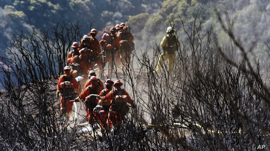 In this photo provided by the Santa Barbara County Fire Department, Cal Fire Inmate Firefighting Hand Crew members hike through the charred landscape on their way to work east of Gibraltar Road above Montecito, California, Dec. 19, 2017.